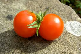 conjoined tomatoes