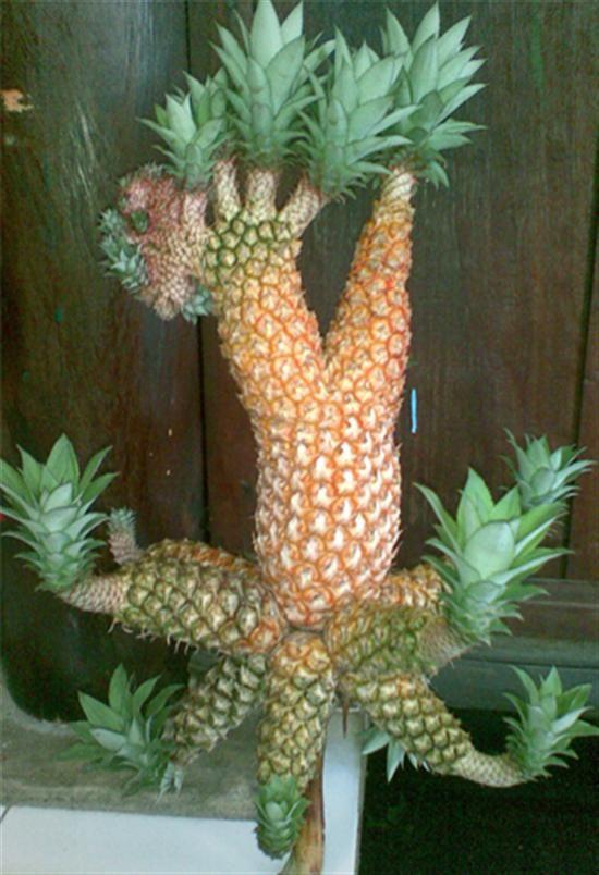 mutant pineapples.jpg