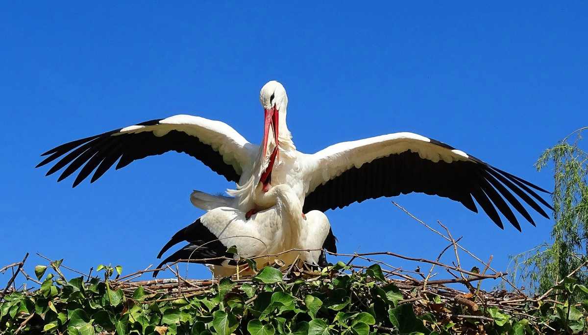 Child suspicious of storks calls bullshit, turns into idiot
